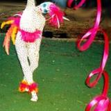 Bolli's Birds of Paradise - Ribbon Dacners - Walkabout Entertainers