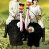 Larger Than Life - The Ostriches - Stilt Walkers - Walkabout