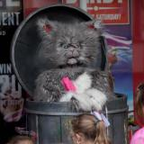 Cat Choir - Musical Feline Street Show Entertainers