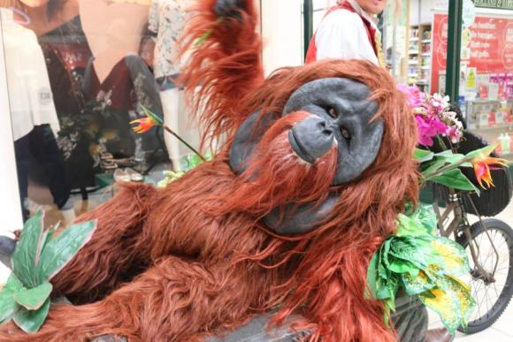 Borneo Again - Capitalist Orangutan Wants you to Join his Monkey Business - Walkabout Entertainer