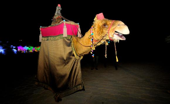 Alice the Camel - Walkabout Puppet Entertainer